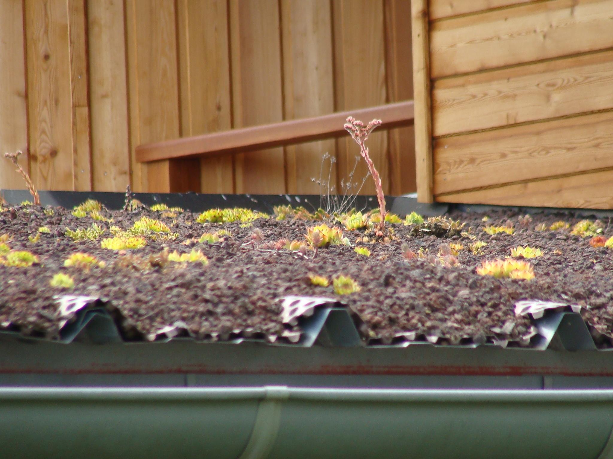 Porche car / toiture végétalisée